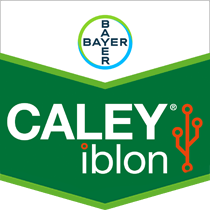 Caley iblon